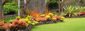 wil_softlandscaping_row4-image-0
